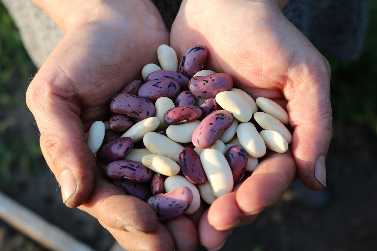 Selection of vegan protein source beans
